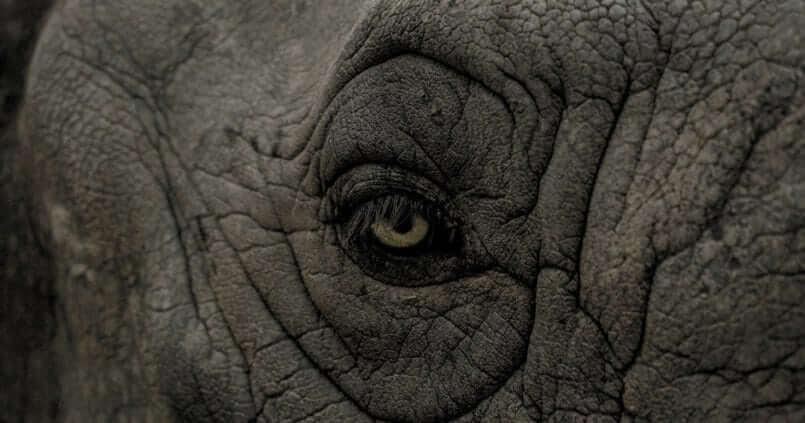 Gros plan sur l'œil d'un éléphant