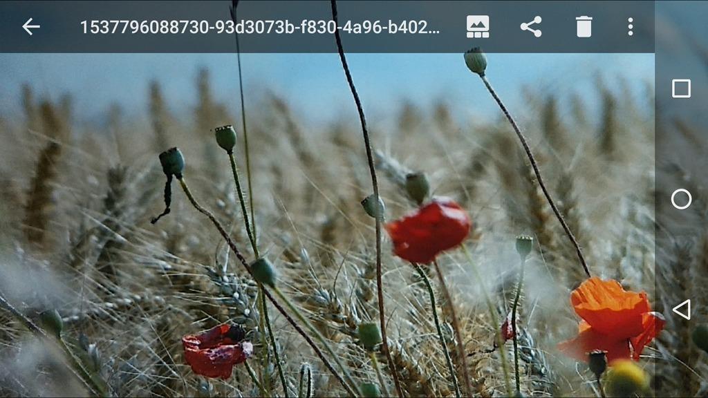 Capture d'écran d'une image numérisée avec PhotoScan, ouverte dans l'application F-Stop.
